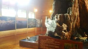 屋久杉自然館別館に写真家 秦さんの写真が展示してあります。