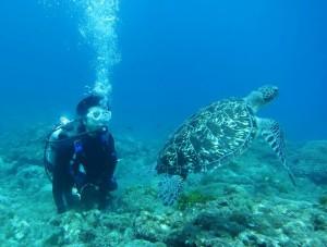 ウミガメと体験ダイバー