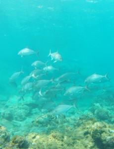 水深3mの浅瀬で群れに遭遇~ ゼロ戦でも囲まれました♪