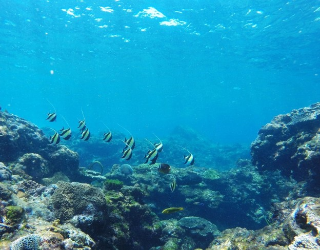 栗生の海 Yakushima