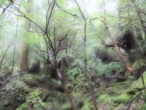 雨の白谷雲水峡 PhotoBy Nさん