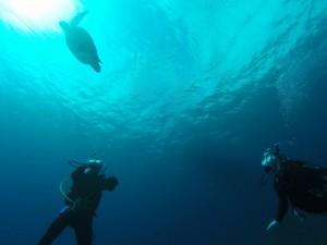念願のアオウミガメ☆ 水面に息継ぎに行く様子を眺めるダイバー