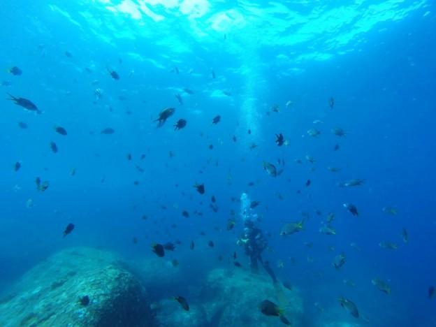 屋久島 ダイビング
