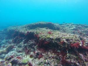 種子島サンゴ調査 元サンゴだった枯れ場