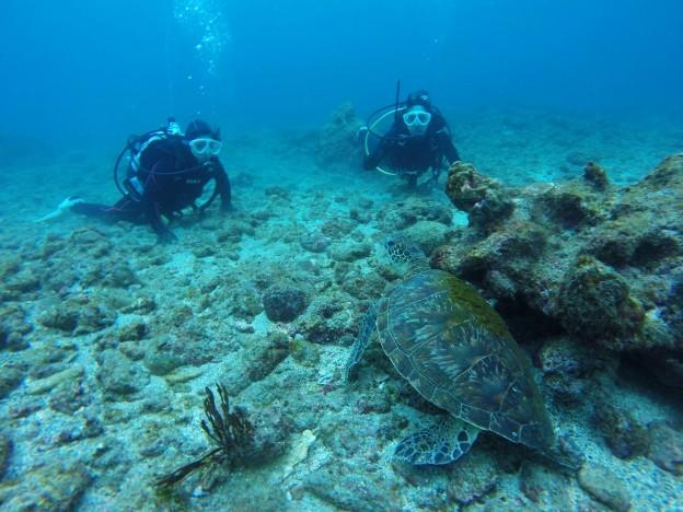 屋久島 体験ダイビング ウミガメ
