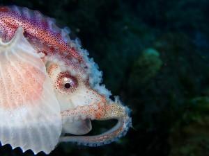 貝もタコもピッカピカ☆食べるとあんまり美味しくないらしいですが、レア物です♪