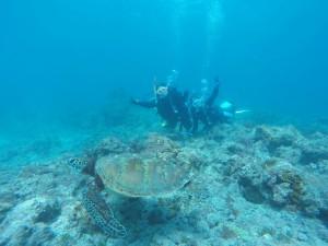 屋久島 元浦にて 体験ダイビングでウミガメと泳ぐ
