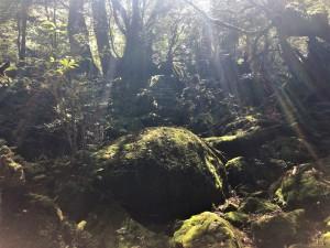 森の中。写真を撮るならぜったいに行き(往路)がオススメです。