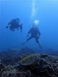 Cカード講習中にウミガメと遭遇ー@屋久島