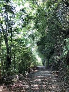 山の中を走ってきました。人どころか猿も鹿も居ない完全なひとりぼっち(笑)
