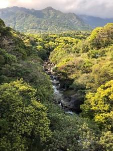 屋久島 新緑美しい川沿いの木々