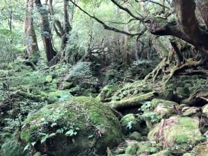 初☆夏のもののけの森!
