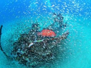 ゼロ戦。徐々にゼロ戦を囲むお魚たちが増えてきてます☆