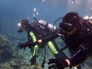 体験ダイビング。