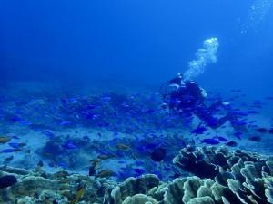 泳いでるだけで幸せになれるほどの魚影でしたー♪