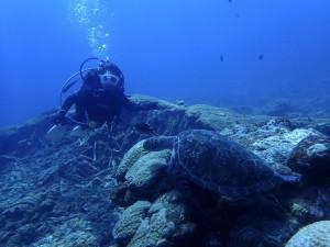 今年は少なめのウミガメとも今日はあちらこちらで出会えました-!