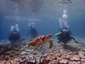 島の子どもたちと体験ダイビングへ。