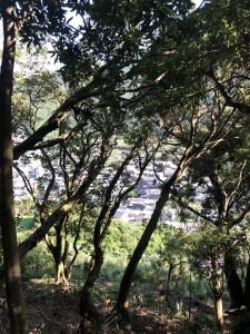 台風前の10/6。一湊の低山・番屋峰へお散歩へ行ってきました。木々の合間から見えるのは一湊集落。