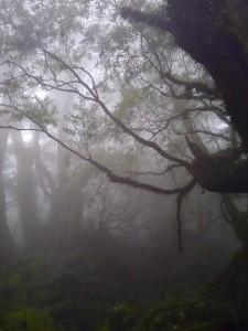 白谷雲水峡。