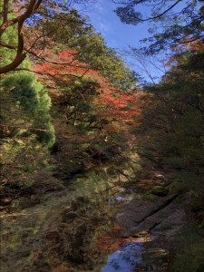 淀川小屋近くの紅葉。しーんとした空気が心地よかった。