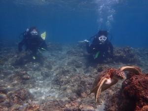 2ダイブ共に水深1mちょいの浅いとこからウミガメが登場!