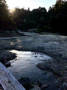 ちいさな水溜まりには氷が張ってました。