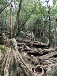 辻峠から少し登った先にある急な木道。ここから100mくらいで太鼓岩!