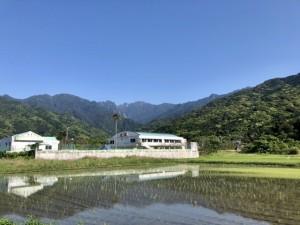 田植えの風景。